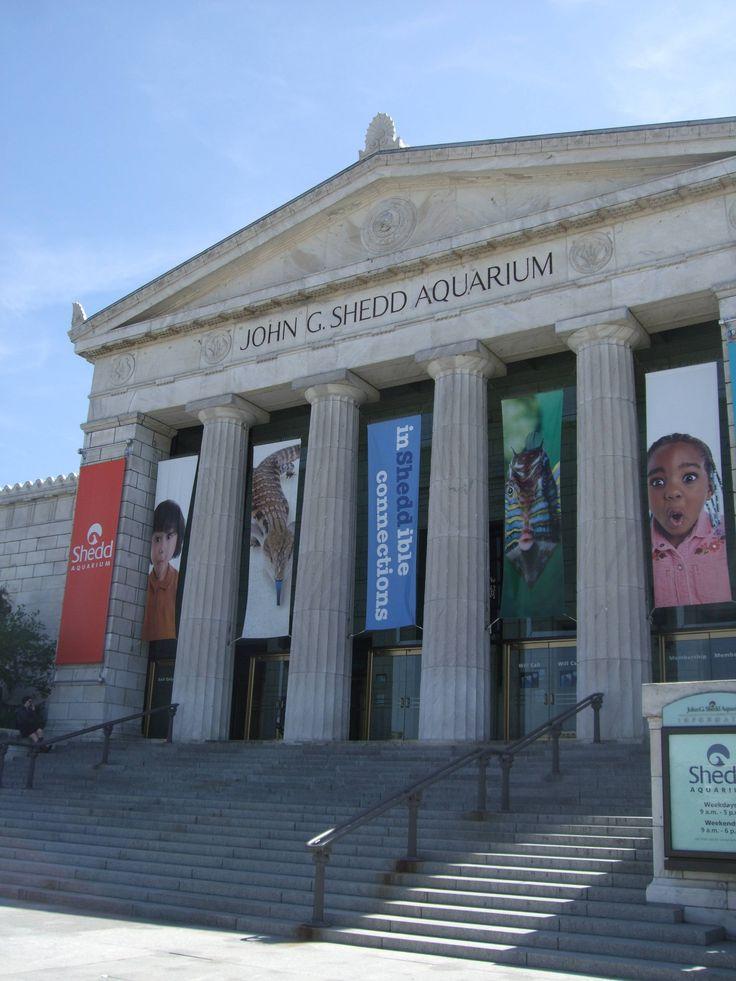 The Shedd Aquarium, Chicago... homesick pt. 4.