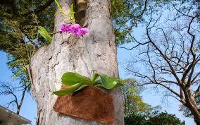 Resultado de imagem para como plantar orquideas  roxas