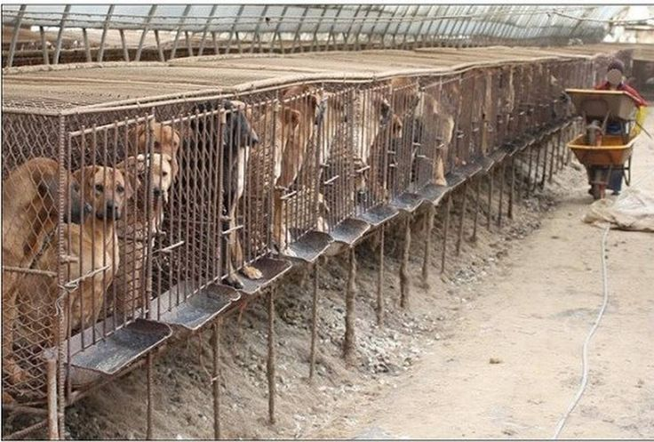 THIS HAS TO STOP. PLEASE REPIN. We are dedicated to educating people about puppy mills. We believe that creating awareness by spreading the word about our mission can help put an end to the cruel commercial dog breeding industry. We ask for your support. Please join us: https://www.facebook.com/saynotopuppymills