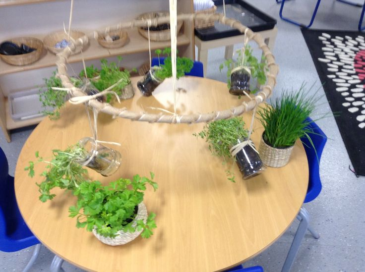 Fresh herb investigation. Mixture of pots hanging from a hessian wrapped hoop which is hanging from the ceiling and pots on the table. This was enhanced with a mortar and pestle towards the end of the week so the children could break off and mix up the herbs. #abcdoes #provocationsforlearning #eyfs