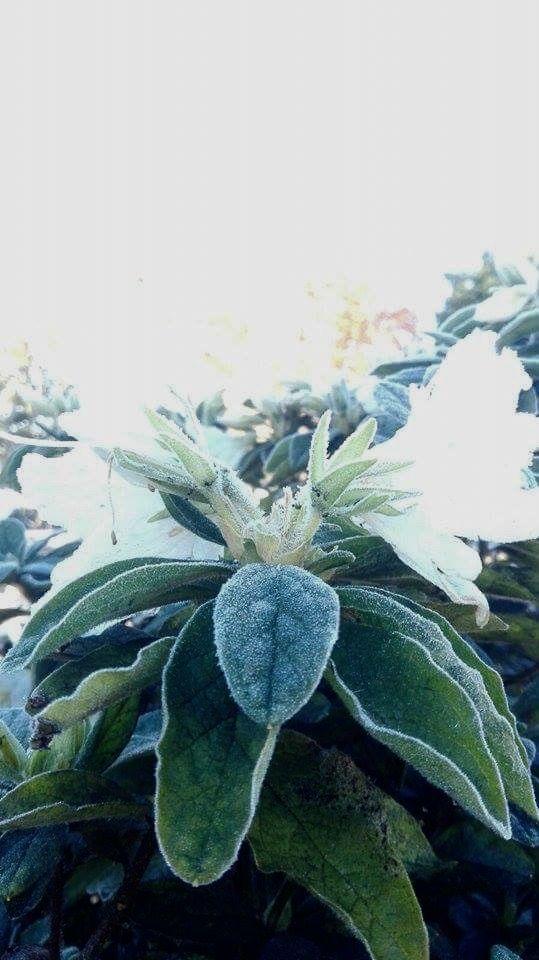 Frosty flowers. By Christy-Lynn Breetvelt