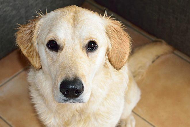 Allemeine Infos rund um den Hund I Hundesitter-Tipps