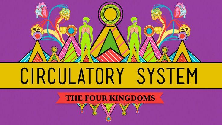 Circulatory & Respiratory Systems - Biology #27
