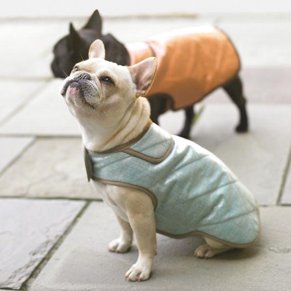 15 besten dog stuff Bilder auf Pinterest | Haustierkleidung, Hunde ...