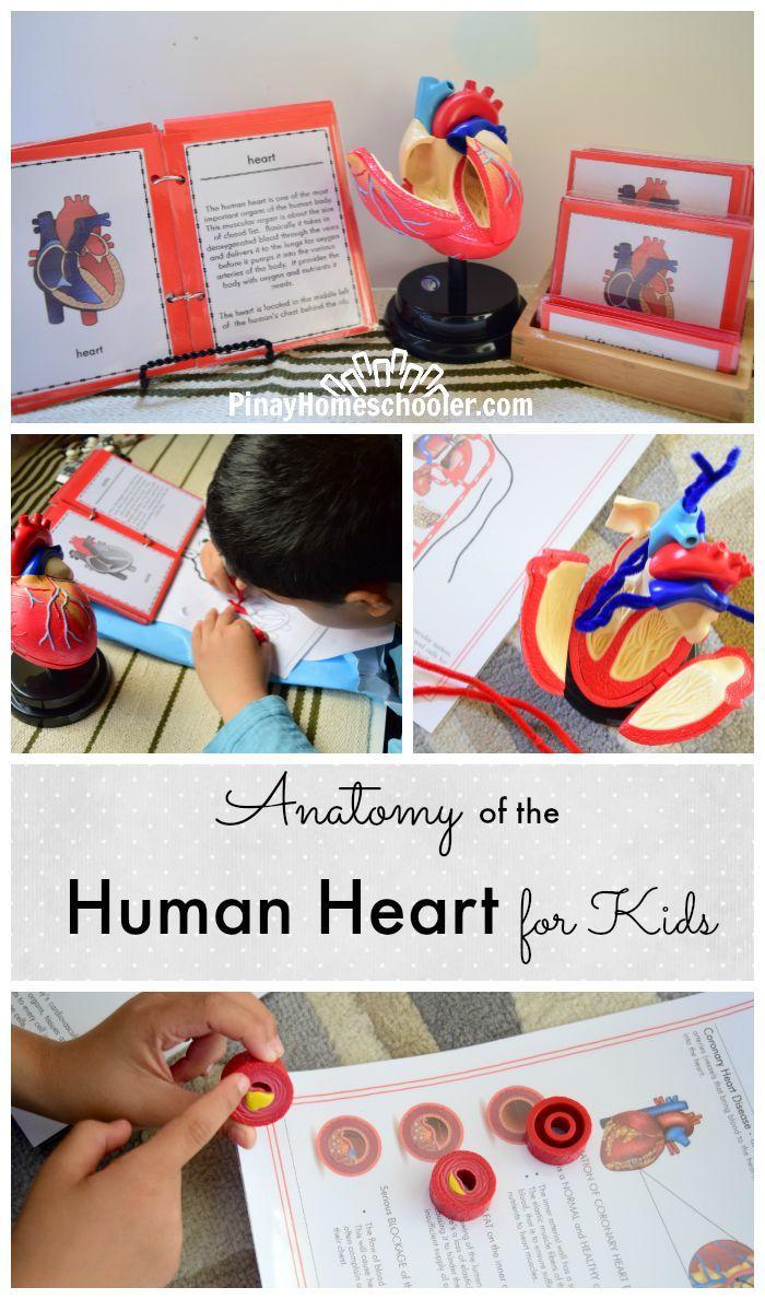 Circulatory System | Learn Anatomy