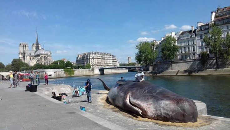the beached animal—although very realistic—is a replica installed by the belgian captain boomer collective to raise environmental awareness.