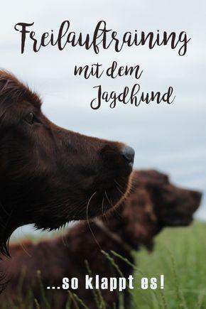 Hundetraining mit dem ambitionierten Jagdhund