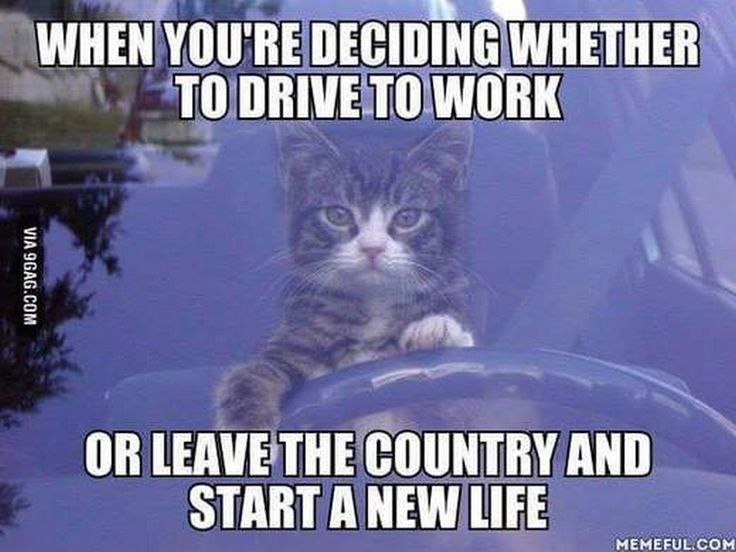 Funny Memes 2016 About Work : 107 best monday humor images on pinterest funny stuff ha ha and