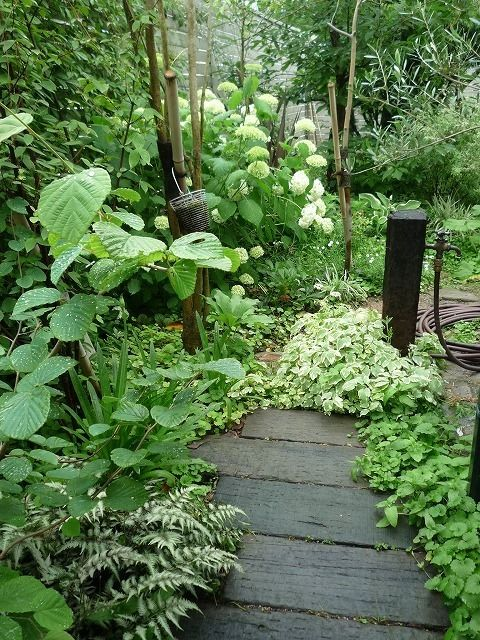 雨の水曜日・・・。   そろそろ梅雨に入るのかな!  そんな感じの空です。   庭では大好きなアジサイ アナベルが  咲き始めました。  やっぱりアジサイにはしっとりと雨が  よくお似合いです。