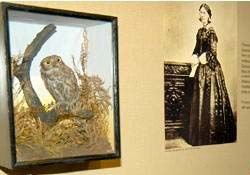 Florence Nightingale carried a pet owl in her pocket. The owlet fell out of a tree, and was being teased by boys. Florence named it Athena (1850-1855). It is encased at the museum that honors Ms Nightingale.