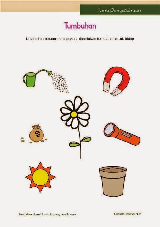 belajar ilmu pengetahuan alam untuk anak kelas 1 SD tentang tumbuhan