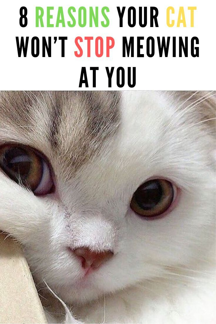 The Reason Cats Meow Is To Express Themselves And Their Emotions You Should Pay Attention To Their Meows So You Know What They Funny Cats Cats Funny Cat Memes