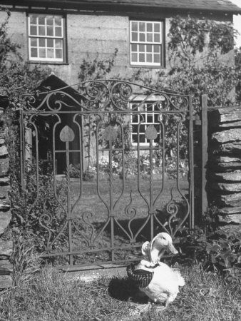 Jemima Puddle-Duck in the garden at Beatrix Potter's HILL TOP FARM, in front of the green wrought iron garden gate and HILL TOP HOUSE. :^)