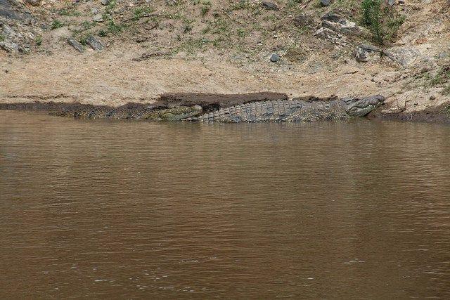 Fatal Crocodile Attack - Matopos Zimbabwe