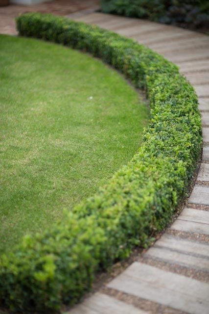 path lined with mini hedges