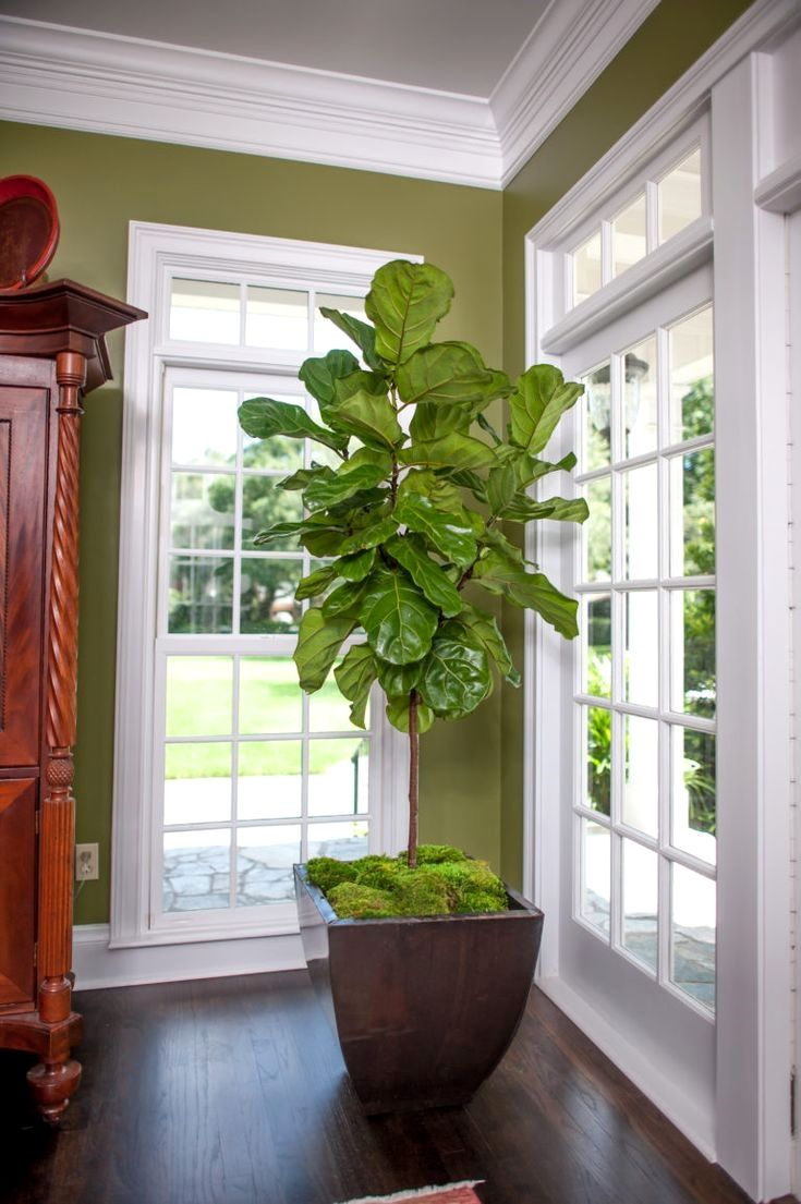 27 Interior Design Plants Inside House Pictures Ideas For The Home Fiddle Leaf Fig Tree
