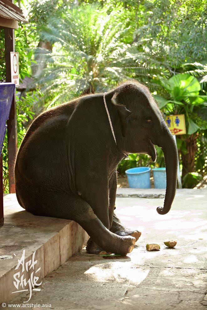 """Indian Elefant Индийский слон ArtStyle.guru Слон, устал от выступлений и думает: """"Когда же я уже выйду на пенсию?!"""" (Слоны в Таиланде освобождаются от работы и помещаются в специальный заповедник по достижению 50-летнего возраста)."""