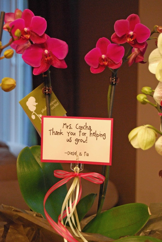 Teacher Gift Idea Orchid ( Would work with any plant) | Gift Ideas | Teacher gifts, Teacher appreciation gifts, Gifts