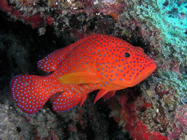 2634 best ocean i want to paint images on pinterest for Jims exotic fish