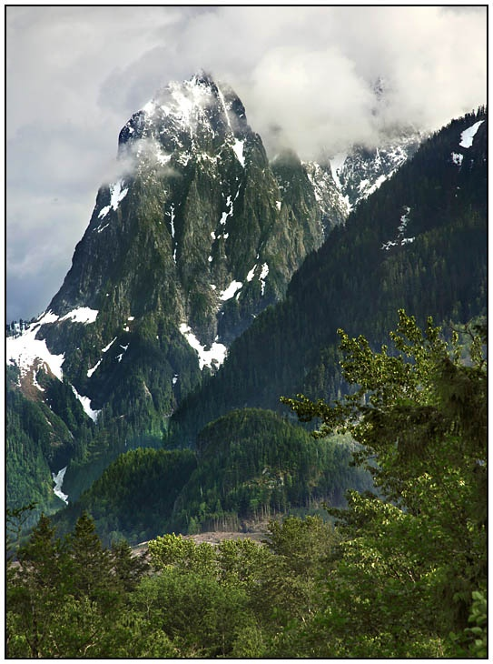 Olympic National Forest area the Pacific Northwest.