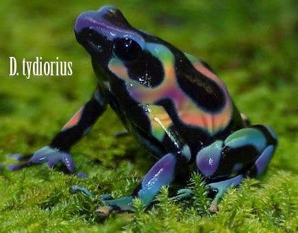Pink frog - photo#54
