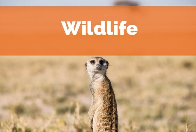 Get inspired by the beauty and fascinating lives of worldwide wildlife. Learn more about how animals live, habitat, wildlife tourism and wildlife conservation. Visit Wayfaring Views and travel on your own terms!