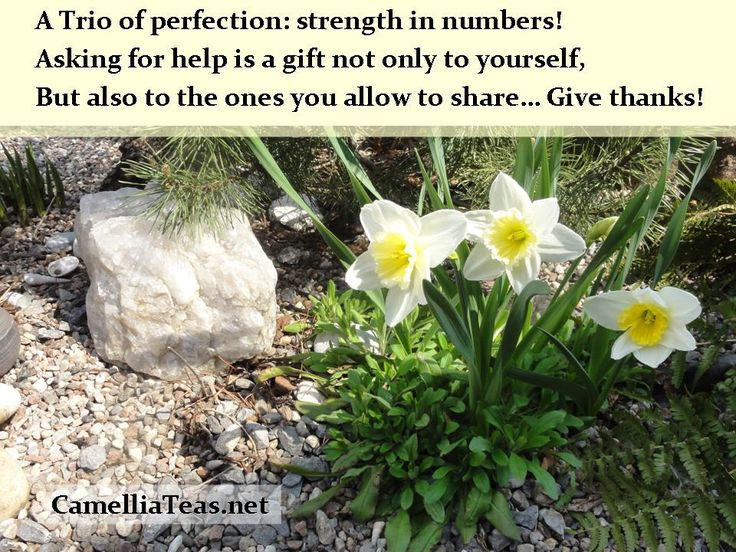 Surrendering to our need for help, it is not a weakness or vulnerability. It is facing struggle with honesty, and allowing those around you, who love and support you, to be of service and help. Allow yourself to receive; allow others to help - it is a gift to all!