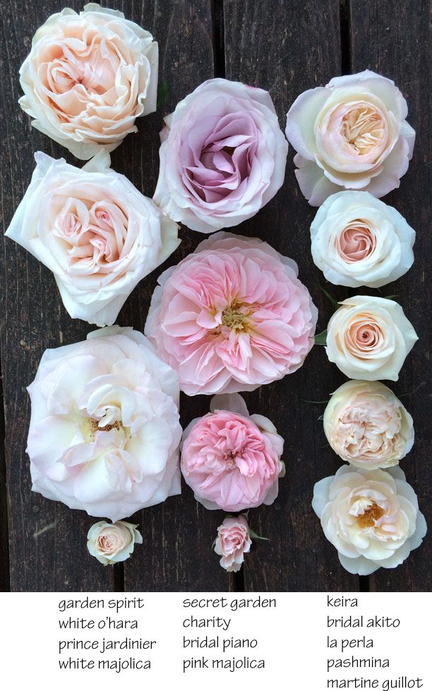 I like white o'hara. I DONT like when you can see the centres of the roses like in the bottom right or big pink in the middle or big in bottom left