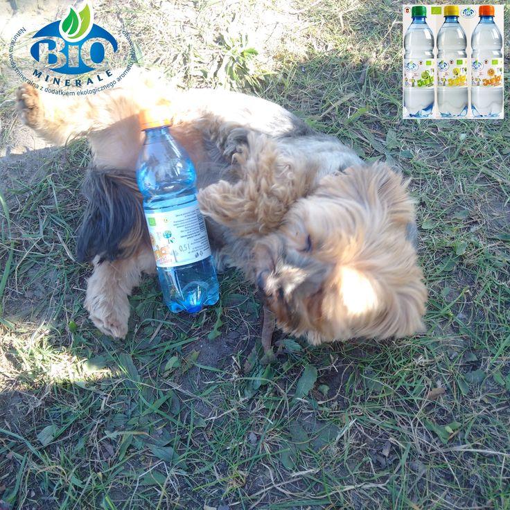 LUNA uwielbia BioMinerale Junior....... BIOMINERALE-Junior * Woda mineralna o smaku cytrynowym- jabłkowym - pomarańczowym *Bez konserwantów * Bez cukru i substancji słodzących z certyfikatem BIO. Zapraszamy do współpracy !!! Producent: MARINO sp.z.o.o * mail: info@marino.pl Tel.: +48 655402192