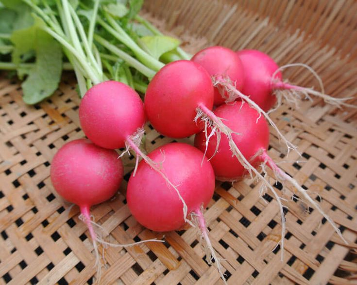 Radish Seeds - PINK BEAUTY - Raphanus Sativus - Easy to Grow - 100 Seeds #theseedhouse