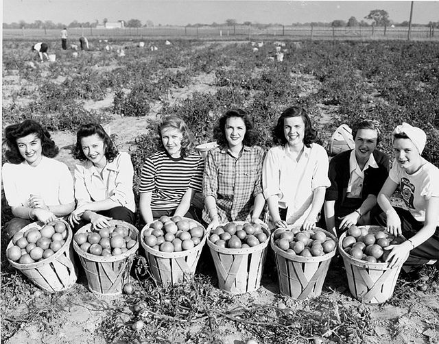 The women's land army poses with their harvest at Victory Gardens, 1940s.