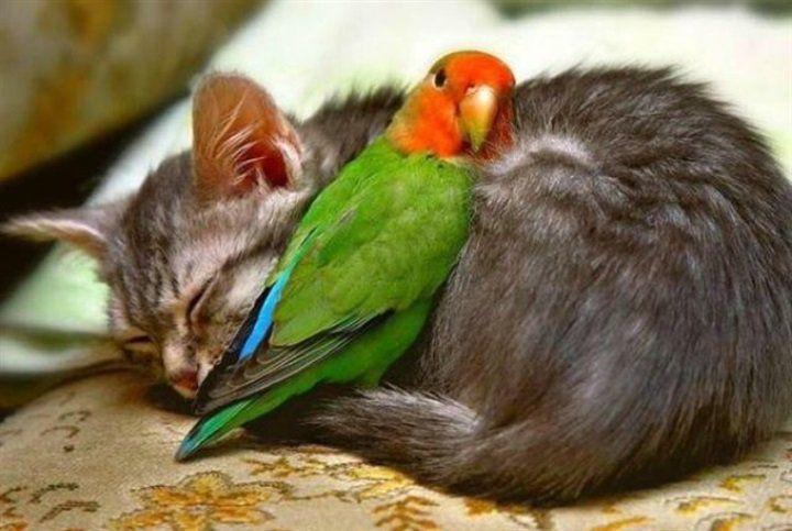 Cat and friend http://snapmilfs.com/?id=amature_hot_milfs