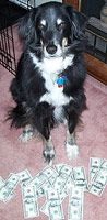 Furry Fundraising - how to raise funds for pet and vet care bills: Dog with money