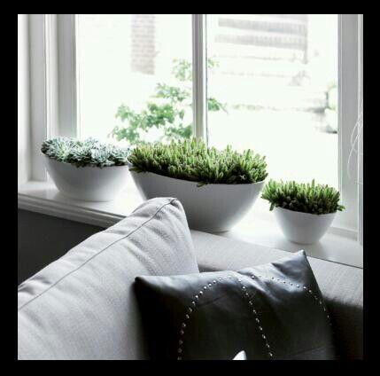 ...garden indoors...