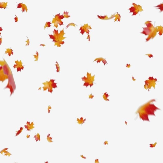 fall leaves png # 2