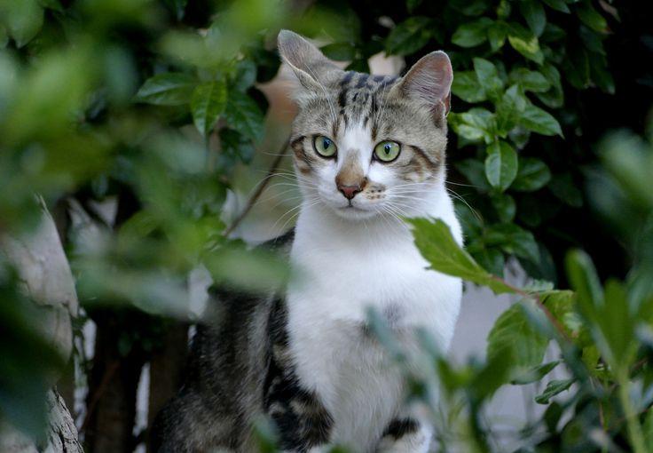 le chat de salon de provence bouches du rh ne provence