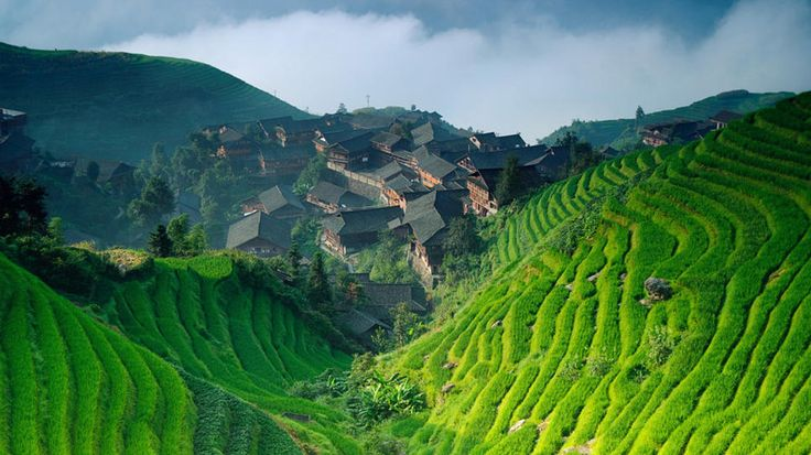 China's famous Longji Terraces - (so named because they resemble dragon scales)