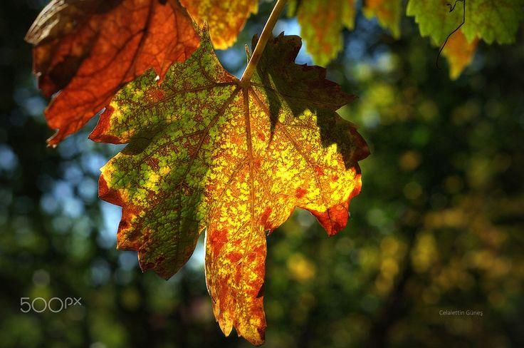 October - ...ve ekim
