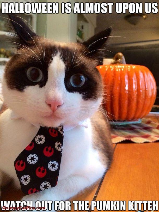 16 Funny Halloween Memes | cat | Funny halloween memes ...