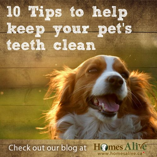 NEW BLOG! 10 Tips to Help Keep Your Pet's Teeth Clean