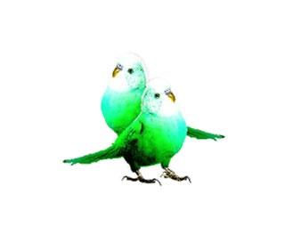 Birds V2  http://annedorte.dk/blog/free-download/
