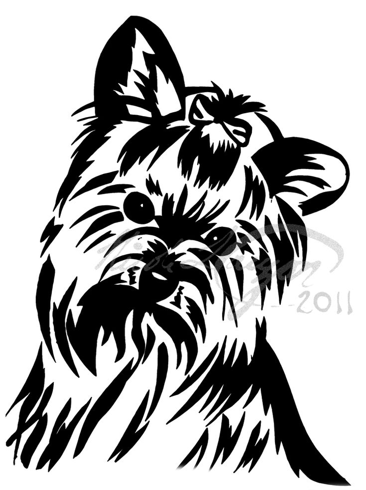 96 Best Black Amp White Yorkie World Images On Pinterest