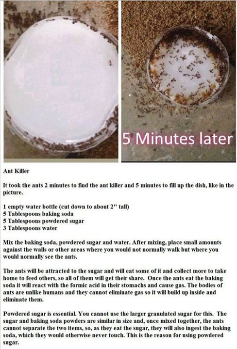 home made Ant Killer thanks for sharing...passing it on