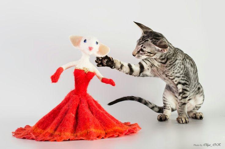 Златочка. Oriental cats