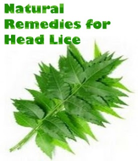 Head Lice Furniture Home Remedies