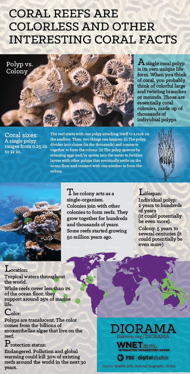 Did you know coral reefs are colorless? And other interesting coral facts...
