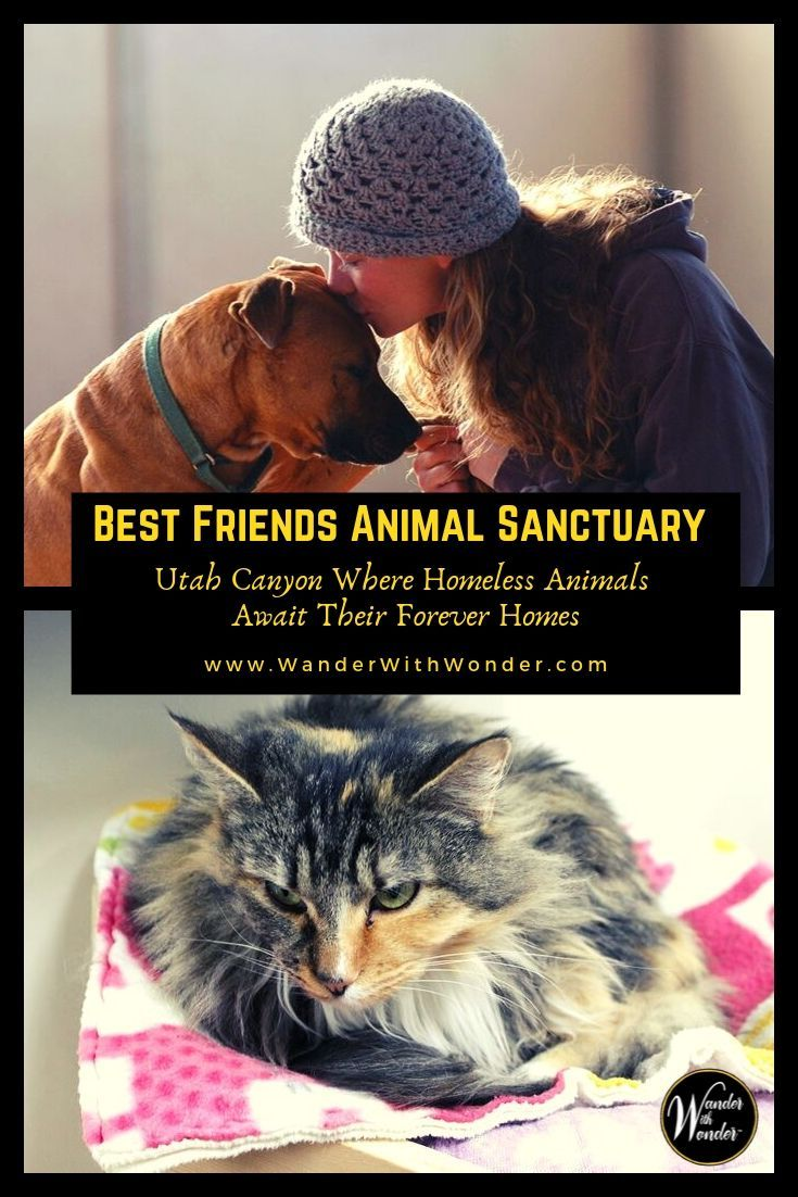 Visiting Best Friends Animal Sanctuary In Utah Animal Sanctuary