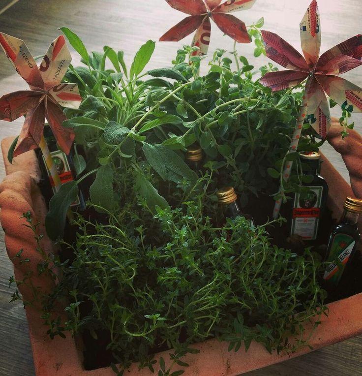 Männergeschenk selbst basteln #kräutergarten #homemade #geldgeschenk