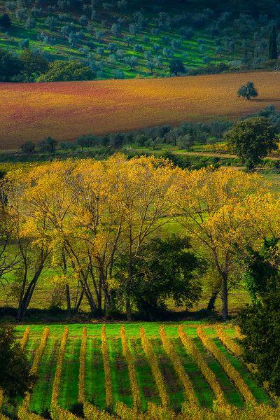 Brilliance Of Autumn In Tuscany - Val d'Orcia Region, Tuscany, Italy