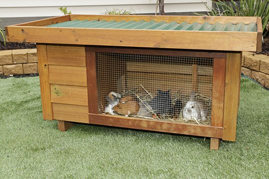 Matt's Homes rabbit hutches are by far the most attractive hutch on the market, it is also the most functional. Their hinged Colorbond® roof makes cleaning and feeding simple. Generously sized run, seperate sleeping quarters and a raised floor makes for a practical comfortable environment for your rabbits, guinea pigs or ferrets.